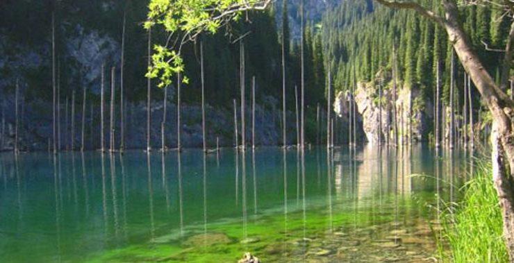 Εντυπωσιακό θέαμα: Έλατα βυθισμένα σε λίμνη