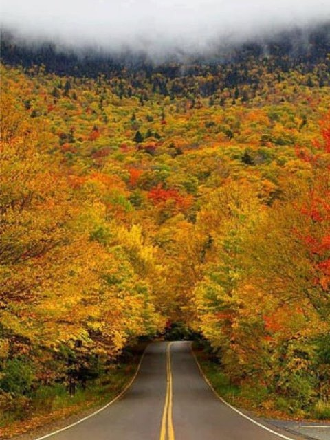 Δείτε εδώ τα ωραιότερα τούνελ από δένδρα στον κόσμο!