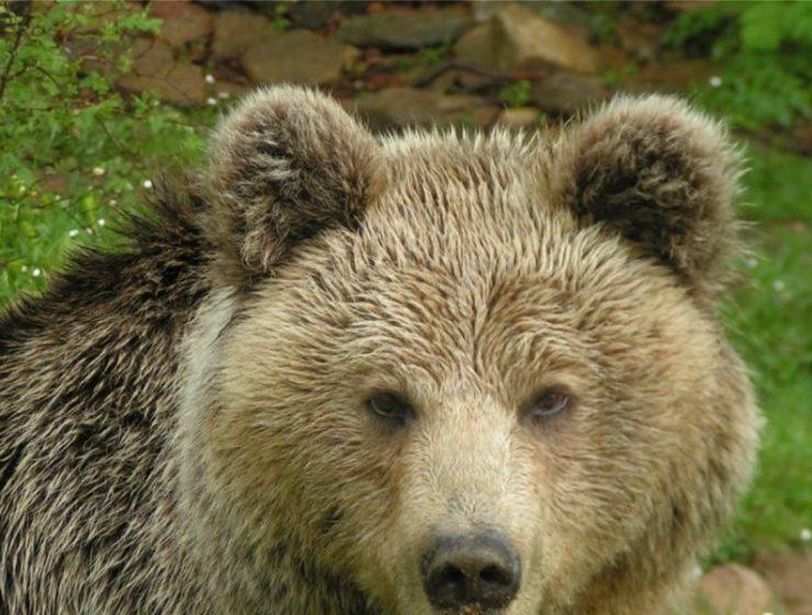 Πού στην Ευρώπη θα δείτε live άγρια ζώα; Η Πίνδος είναι ένα από αυτά!