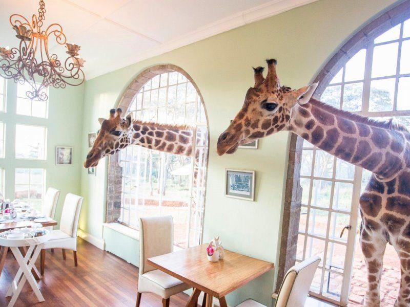 Πού θα απολαύσετε ένα μοναδικό πρωινό με μία συμπαθέστατη καμηλοπάρδαλη!