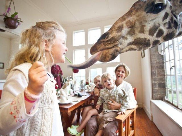 Πού θα απολαύσετε ένα μοναδικό πρωινό συντροφιά με μία συμπαθέστατη καμηλοπάρδαλη!