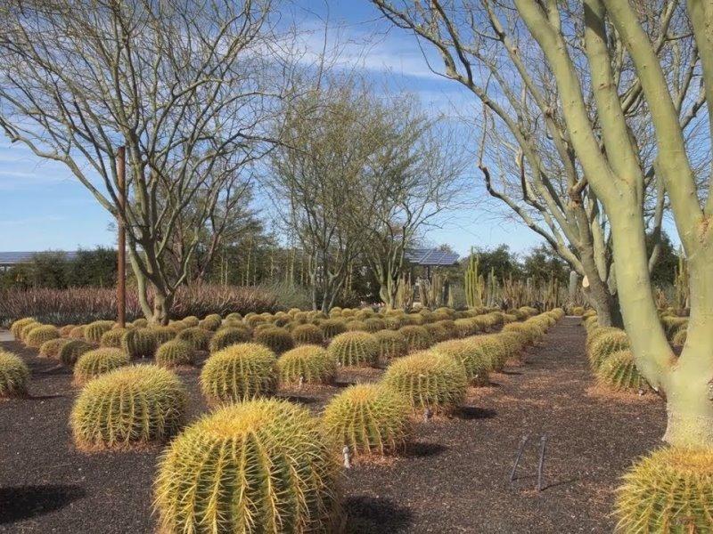 Δείτε την απίθανη όαση από κάκτους στην καρδιά της ερήμου στην California!