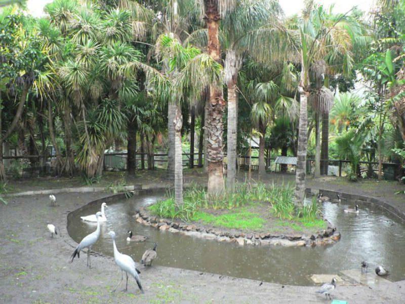 Ένας τροπικός κήπος γεμάτος πτηνά στο Κέιπ Τάουν