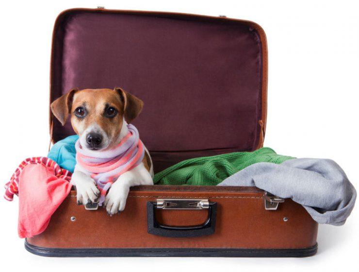 Οι πιο φιλικές χώρες της Ευρώπης για ταξίδια με τα κατοικίδιά σας!