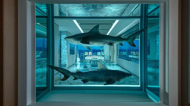 Empathy Suite - ενυδρείο με δύο βαλσαμωμένους λευκούς καρχαρίες