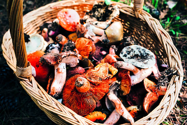 Γιορτή Μανιταριού, Ευρυτανία