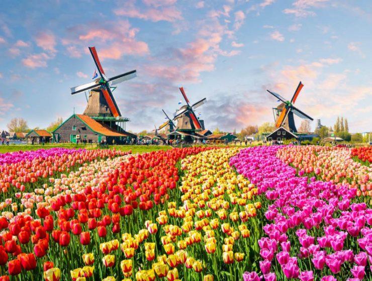 "Keukenhof: Ο φημισμένος ""Κήπος της Ευρώπης"" στην Ολλανδία που γεμίζει με τουλίπες"