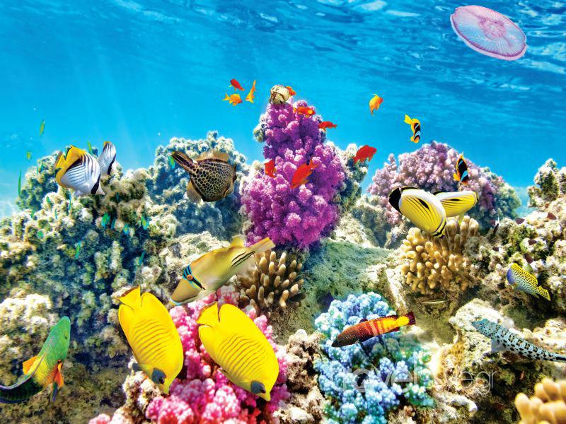 Ιταλία: Εντοπίστηκε ο πρώτος κοραλλιογενής ύφαλος στη Μεσόγειο