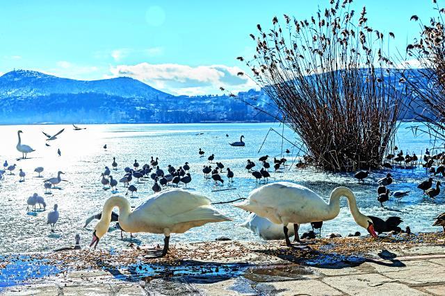 Λίμνη Καστοριάς ή Λίμνη Ορεστιάδα