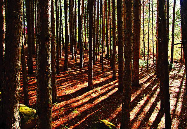 Το δάσος στο Νεραϊδοχώρι Τρικάλων
