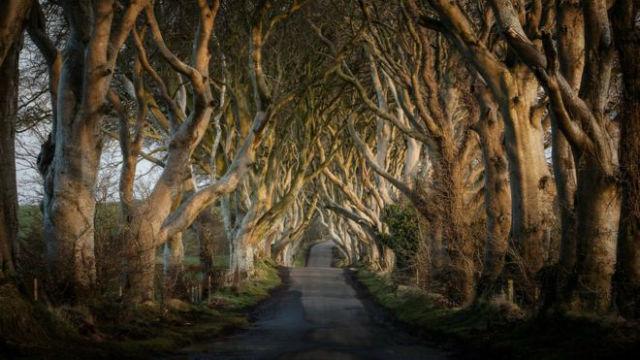 The Dark Hedges, Βόρεια Ιρλανδία