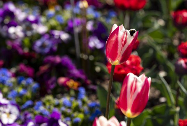 Καιρός - άνοιξη - λουλούδια