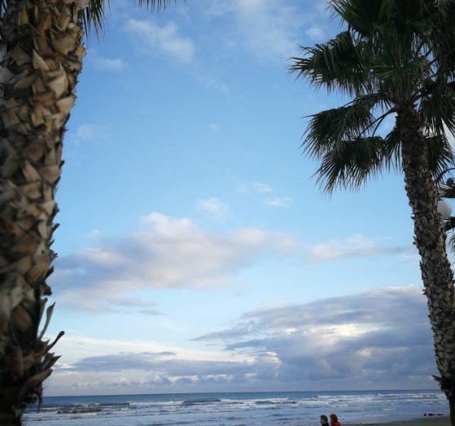 Κύπρος φοίνικες παραλία