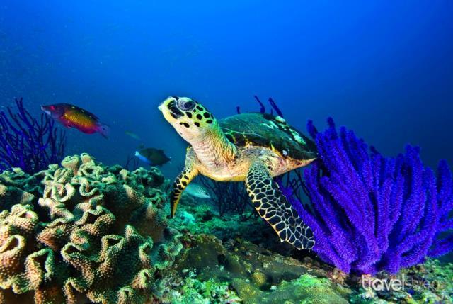 Θαλάσσιες χελώνες στο Ομάν