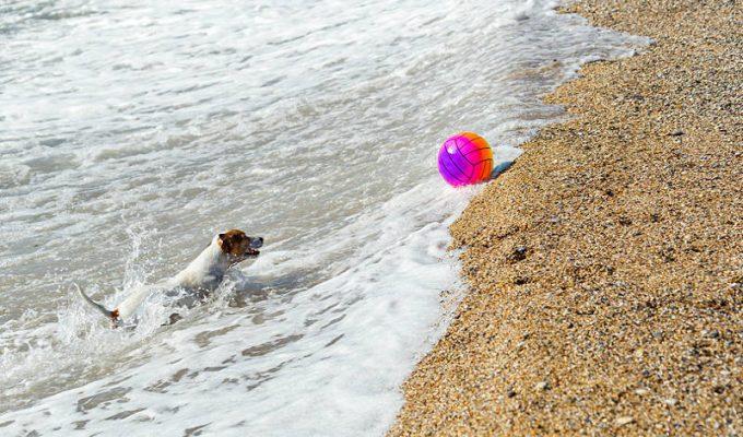 10 συμβουλές για μια αξέχαστη μέρα στην παραλία με τον σκύλο σας!