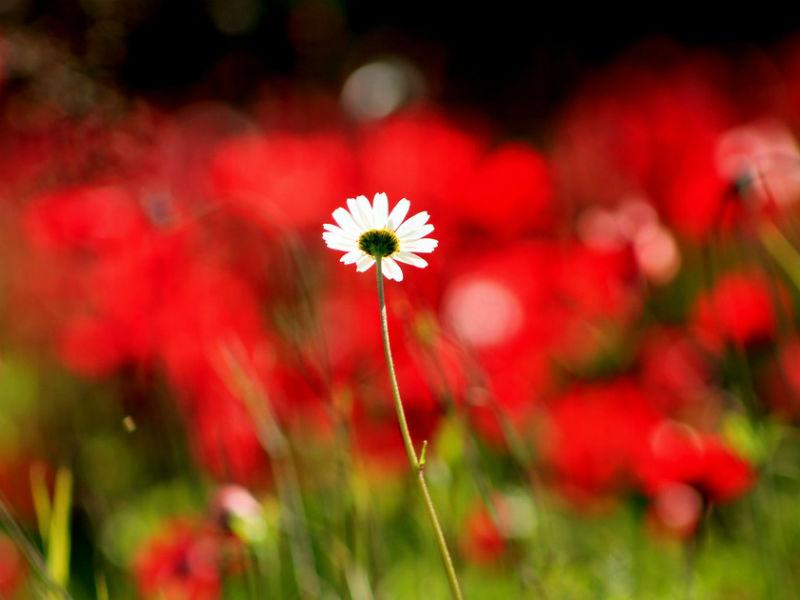 Πρωτομαγιά λουλούδια
