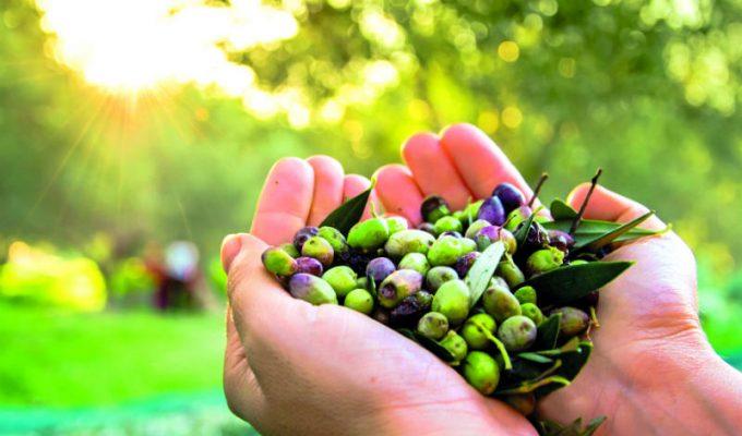 Λευκάδα: Γευόμαστε τα φημισμένα τοπικά προϊόντα του νησιού