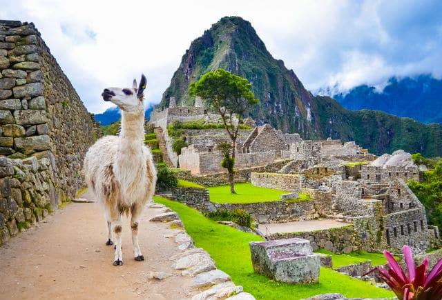 Περού Λάμα