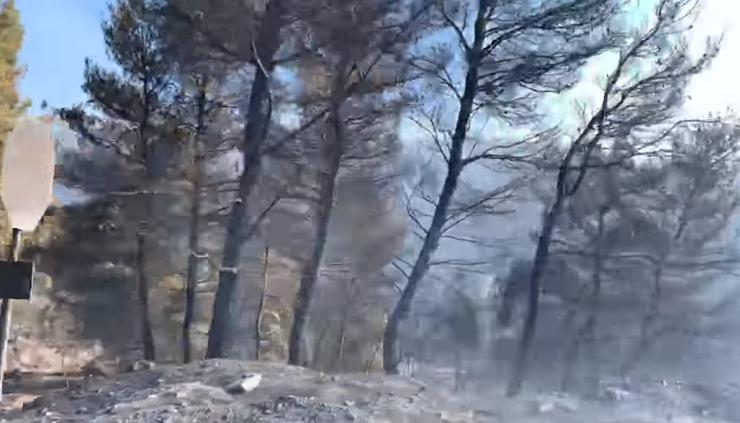 Εύβοια φωτιά