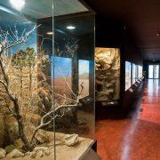 Μουσείο Φυσικής Ιστορίας Κρήτης