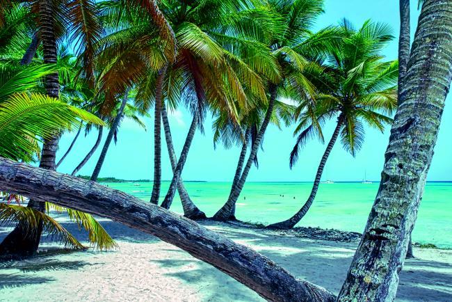 Saona Island, Δομινικανή Δημοκρατία