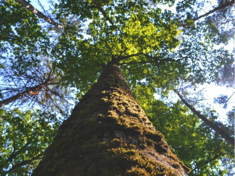 Υιοθέτησε ένα δέντρο - Δήμος Αθηναίων
