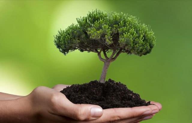 Υιοθέτησε ένα δέντρο Αθήνα