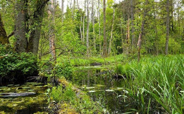 Πολωνία φύση