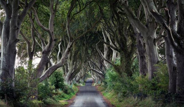 Dark Hedges Ιρλανδία