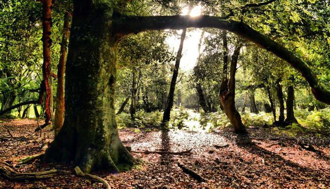 Νew Forest, Hampshire, νότια Αγγλία