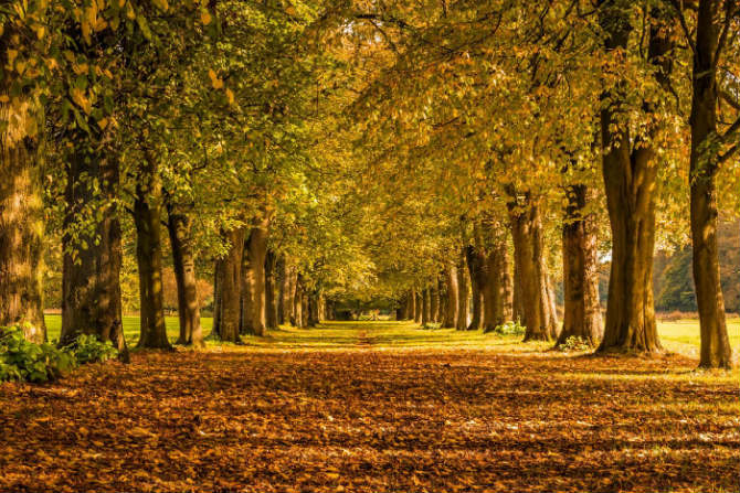Lime Avenue στο Marbury Country Park, Cheshire, βορειοδυτική Αγγλία