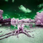 Pingelap: Μαγικό τροπικό νησί