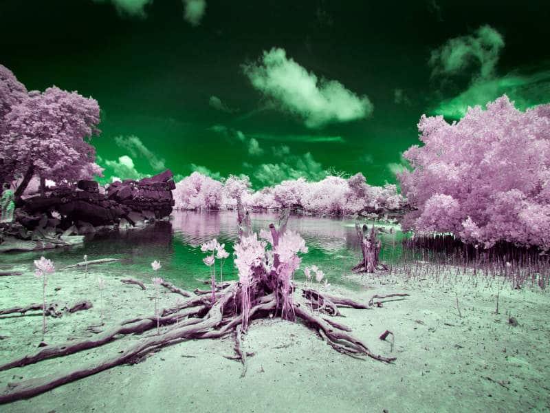 """Το """"μαγικό"""" τροπικό νησί με τα απίστευτα χρώματα που δεν μπορούν να δουν οι κάτοικοι του"""