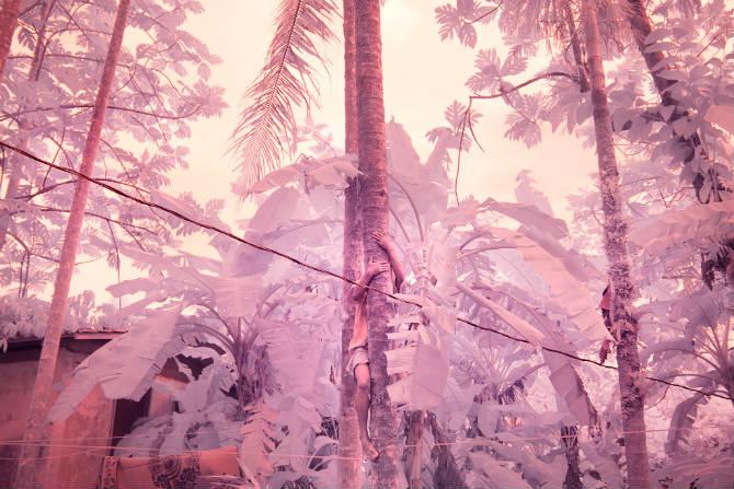 το δάσος του Πίνγκελαπ