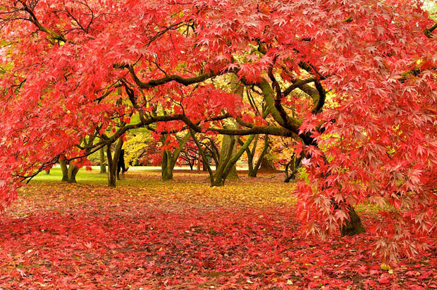 Westonbirt National Arboretum, Gloucestershire, νοτιοδυτική Αγγλία