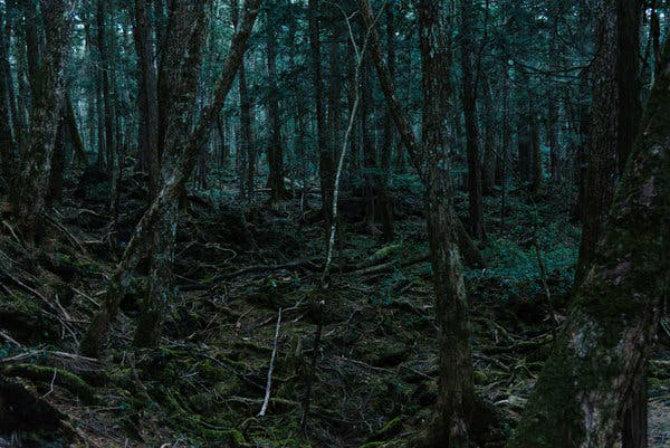 Aokigahara, Ιαπωνία τρομακτικά δάση