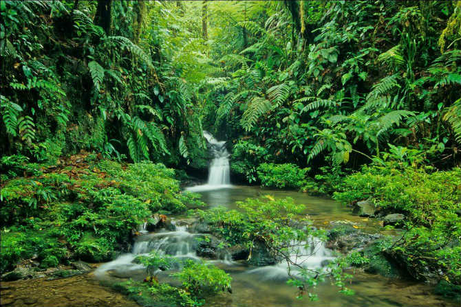 Εθνικό Πάρκο Braulio Carrillo, Κόστα Ρίκα