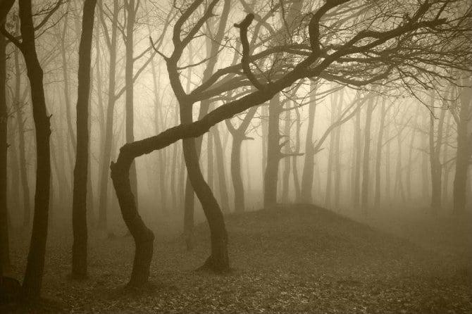 Θέλετε να ακούσετε το θρόισμα των φύλλων στα δάση του κόσμου; Τώρα μπορείτε με ένα κλικ!