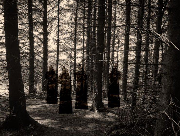τρομακτικά δάση
