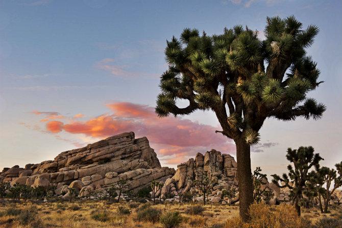 Εθνικό πάρκο Joshua Tree, Καλιφόρνια, ονειρικά μέρη