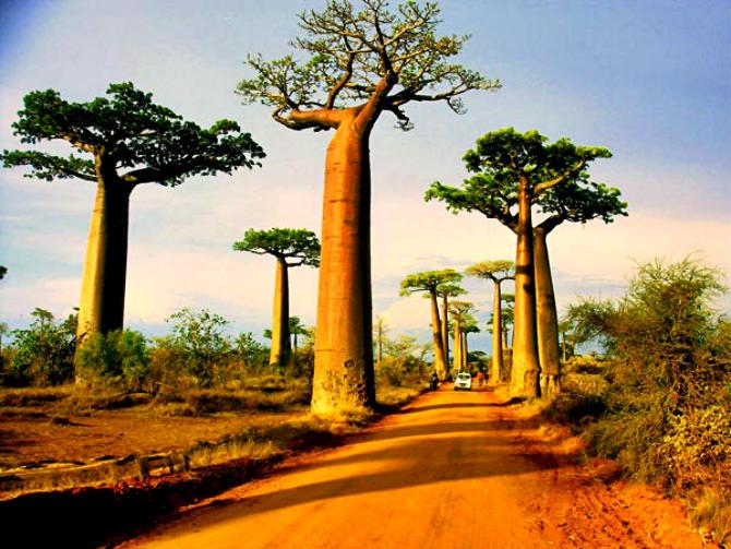 Λεωφόρος των Μπαομπάμπ, Μαδαγασκάρη
