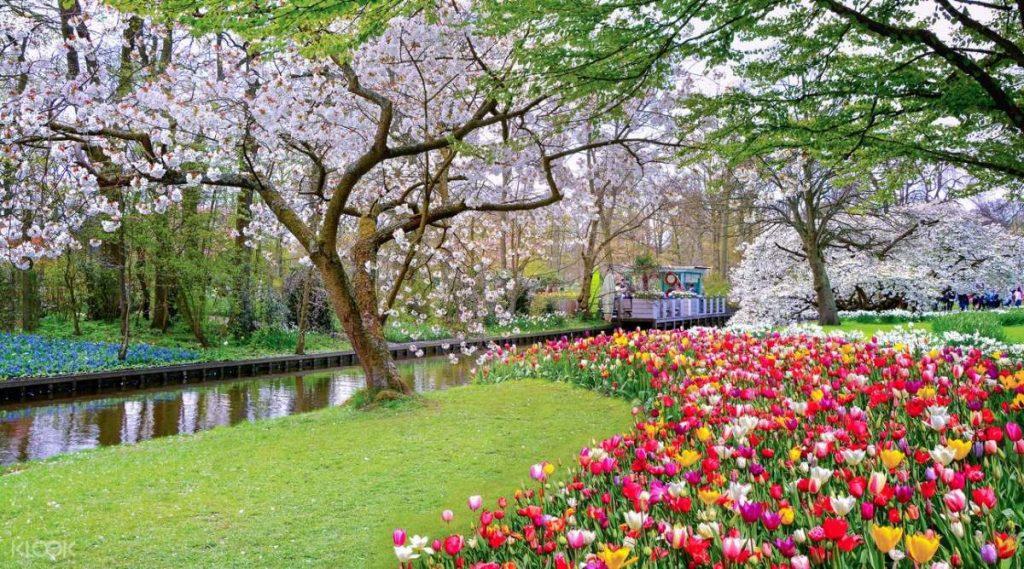 Κήποι Keukenhof, Ολλανδία