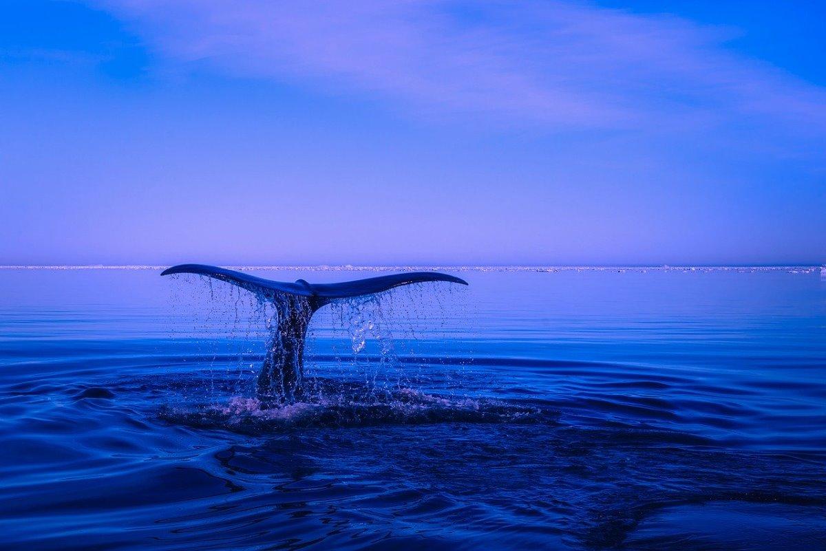 Φάλαινα Αλάσκα