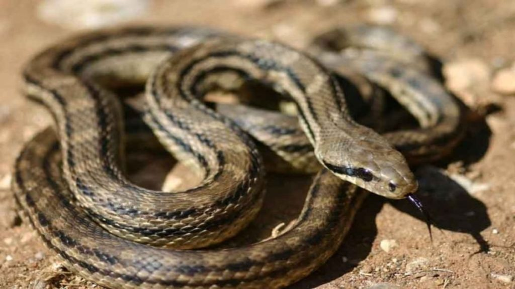 Πολλά φίδια εμφανίζονται την τελευταία βδομάδα στις ελληνικές παραλίες