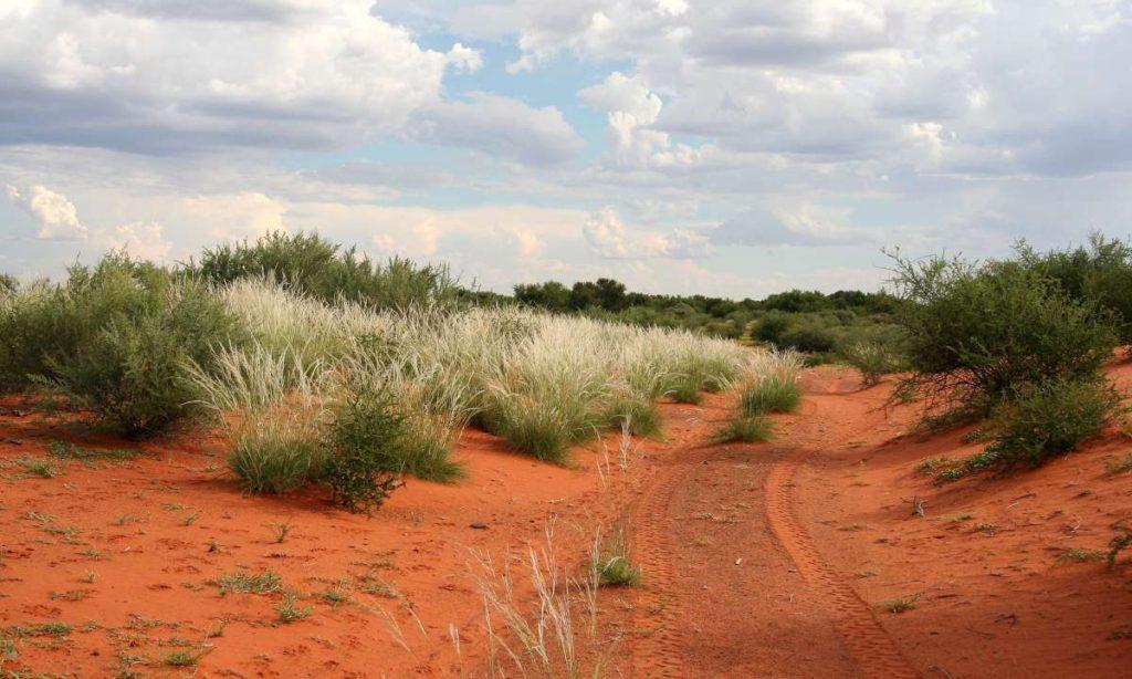 Έρημος Καλαχάρι