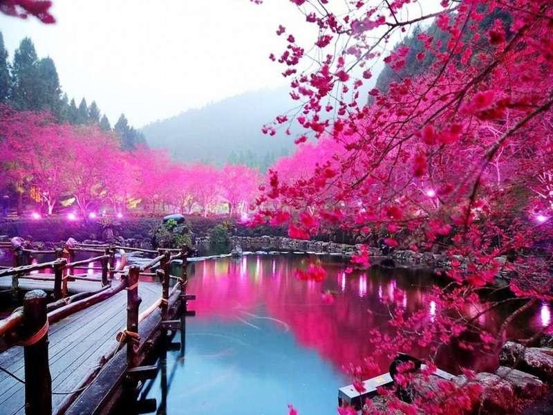 Λίμνη Sakura