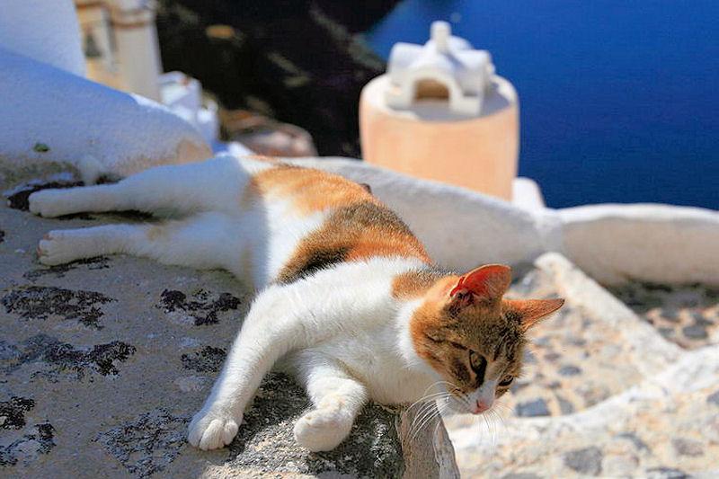 ξαπλωμένη γάτα σε πεζούλι στη Σαντορίνη