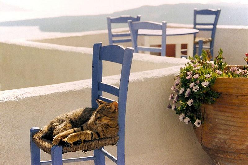 γάτα ξαπλωμένη σε καρέκλα