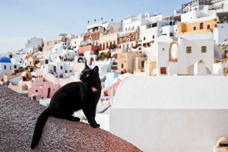 Μαύρη γάτα στη Σαντορίνη
