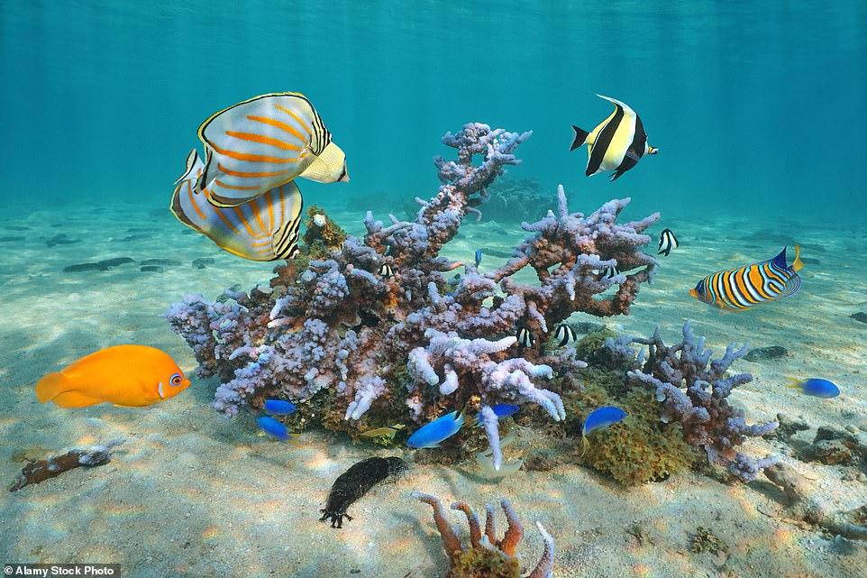 Ύφαλος θάλασσας